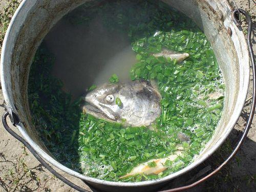 рецепты рыбного супа без картошки